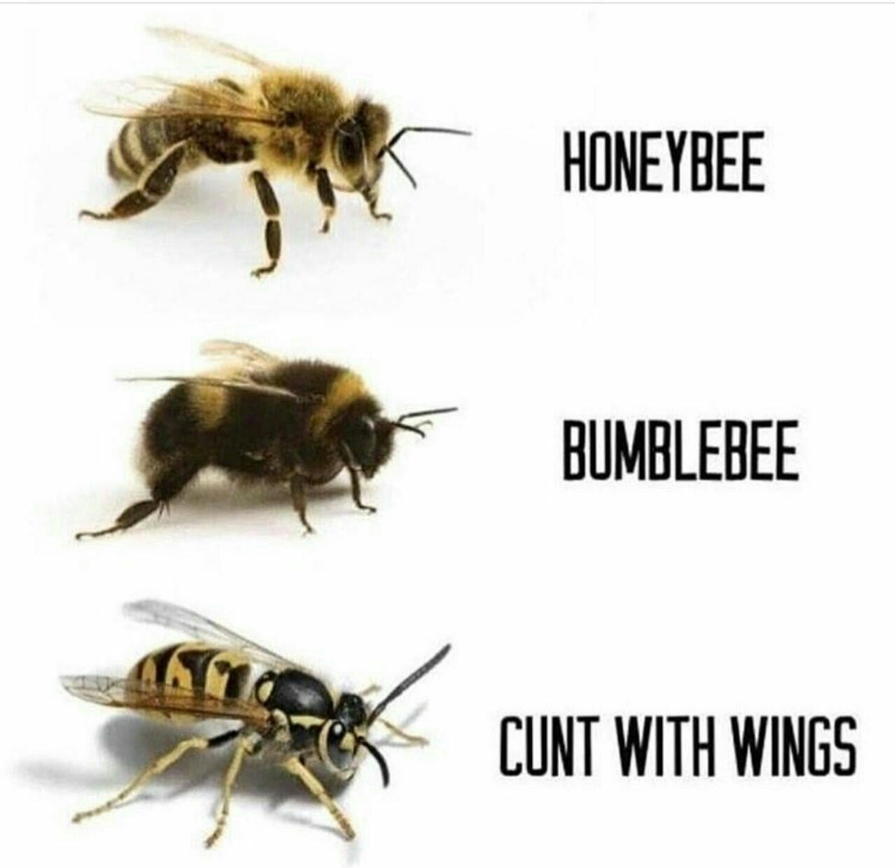 Pin By Andanda On Pentru Cand Esti Trista Bee Edgy Memes Funny Memes