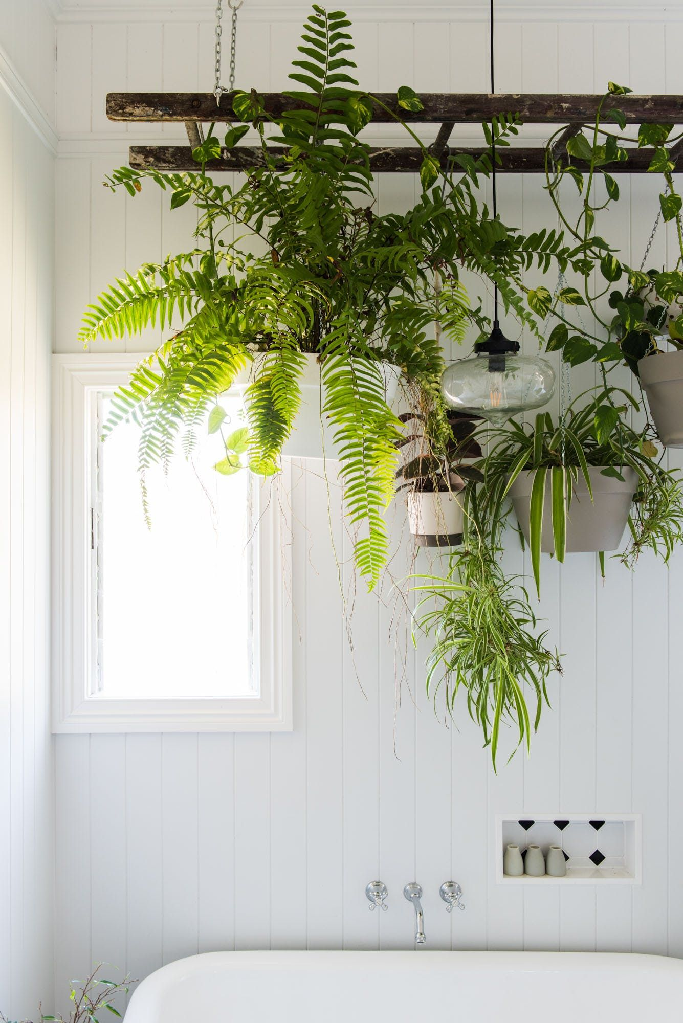 Cats And Bright Colors In An Eclectic Modern Country Home Hanging Plants Indoor Plant Display Ideas Bathroom Plants