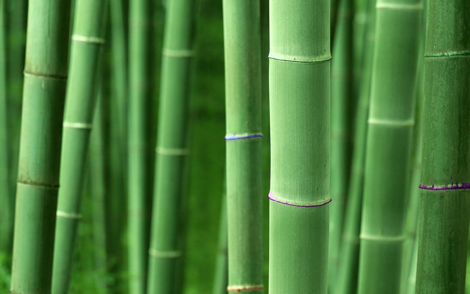 Bamboo Looking Wallpaper Bamboo Wallpaper Bamboo Background