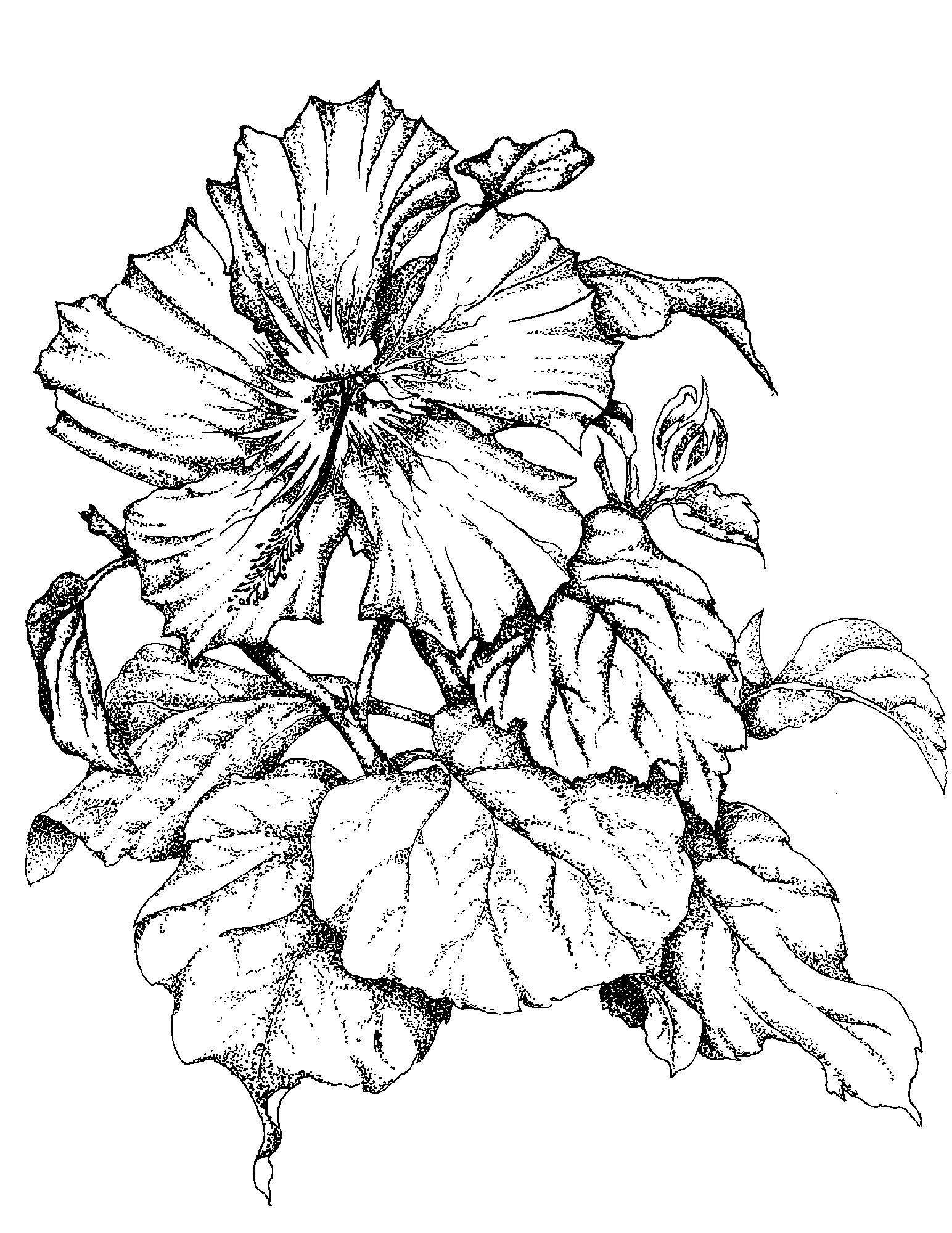 Sketches Of Flowers Single Hibiscus Flower Art I Like