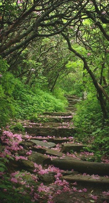 Photo of Garden Path-creative-ideas-for-gartenweg-design_2