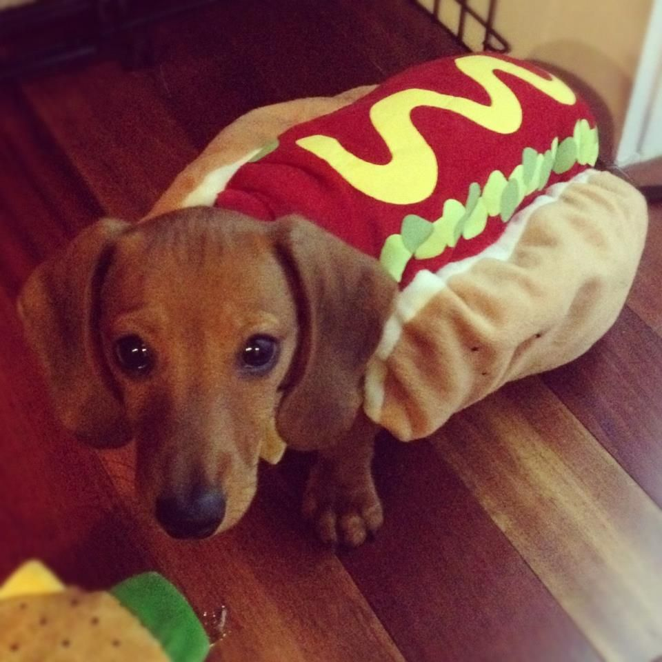 do these buns make me look fat instagram frank the wiener doxie love pinterest. Black Bedroom Furniture Sets. Home Design Ideas