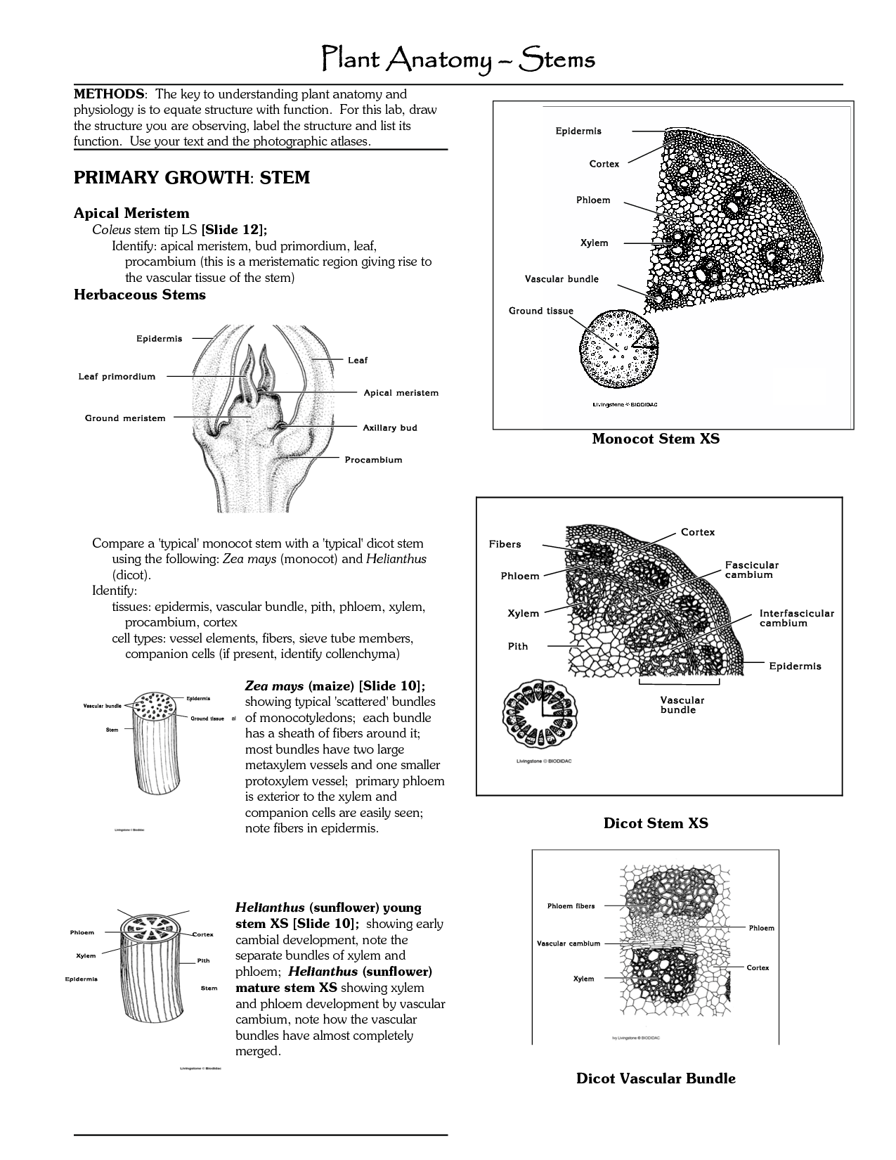 worksheet Xylem And Phloem Worksheet differences between xylem and phloem vessels the structure is non vascular plants