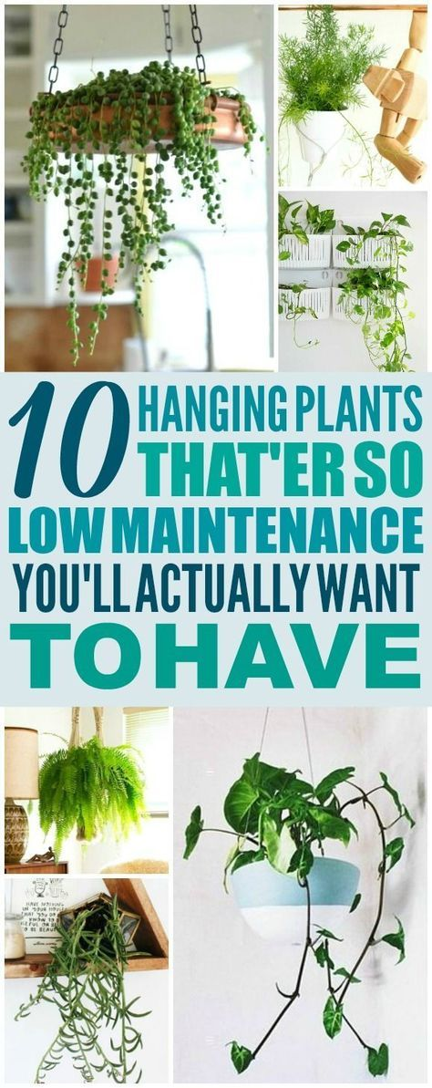 15 plants Indoor spaces