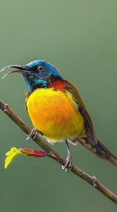 Beautiful sunbird.