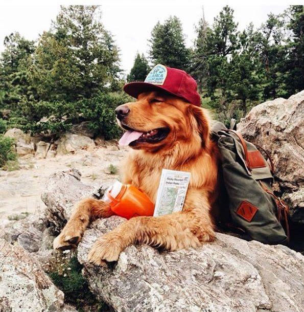 Aspen un Golden Retriever ama ir de aventuras con sus