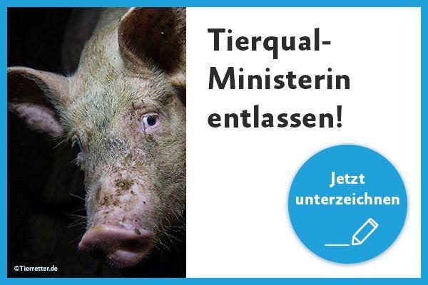Petition Tierqual Ministerin Entlassen Tiere Tierschutz Agrar