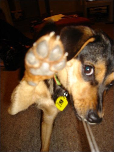 Jem High Five Dog Lovers Dogs All Dogs
