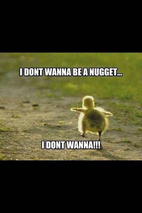 Run chickie, run!!!