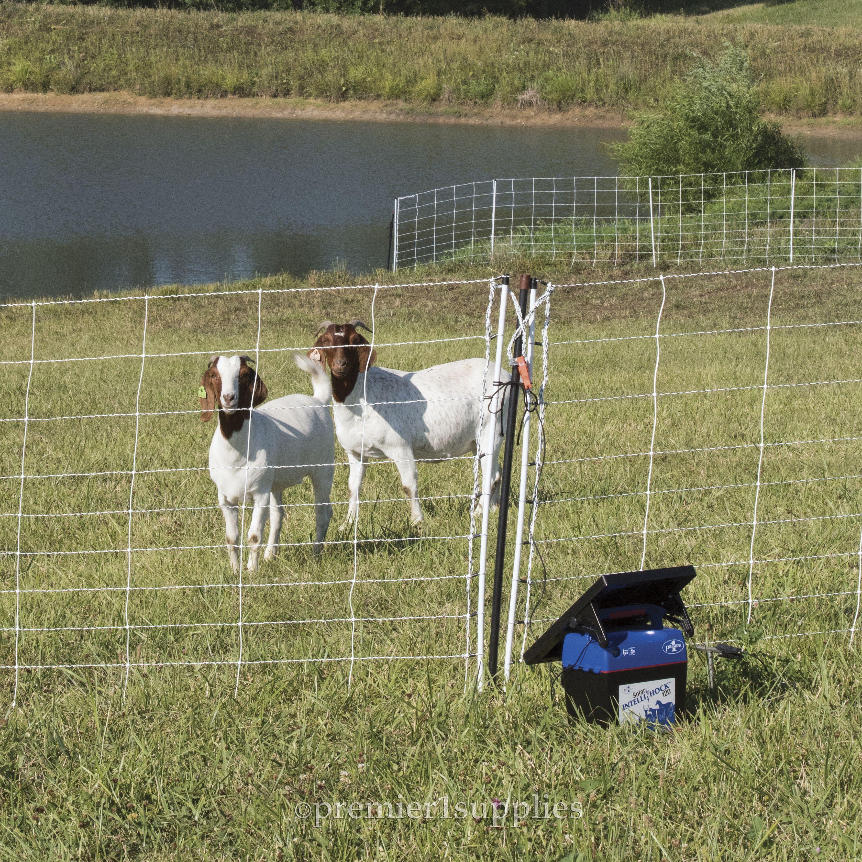 Solar IntelliShock® 120 Energizer & Kit | Fences that Work