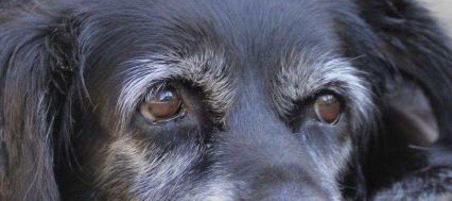 Pet health euthanasia decisions involve qualityoflife