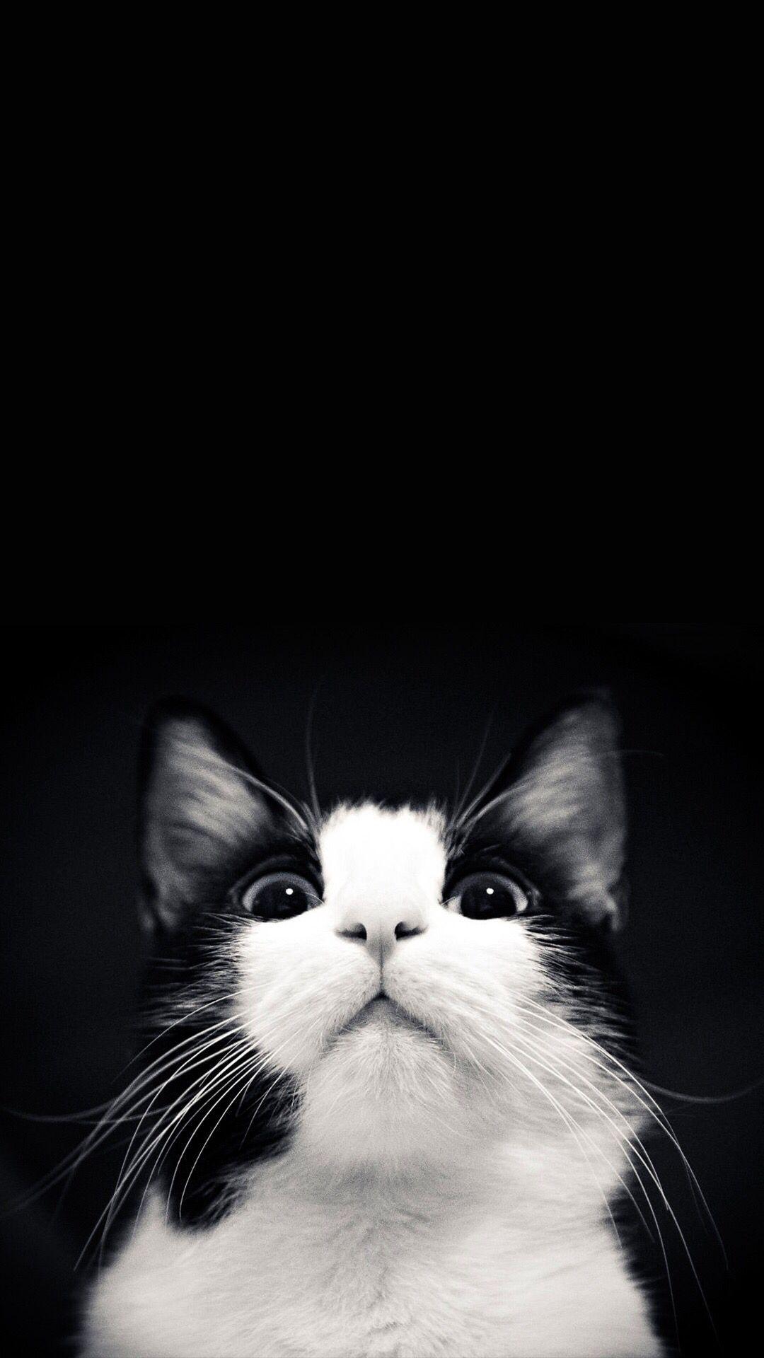 Fresh Black And White Cat Photos Cats White Cat Cat Pics