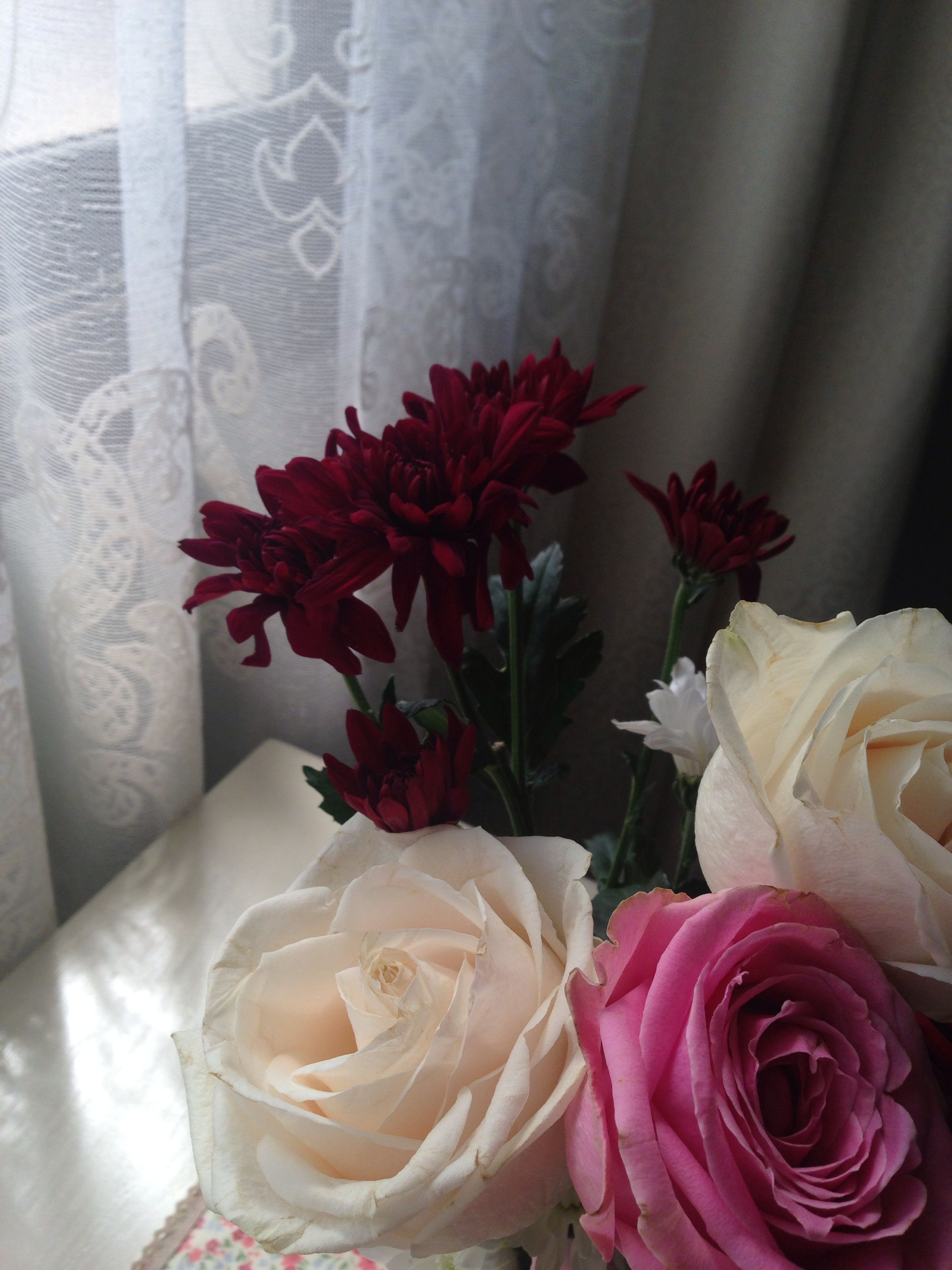 ورد الصباح Flowers Rose Plants