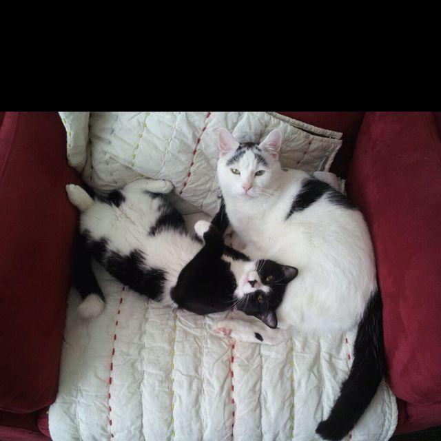 Cat book pic. :)