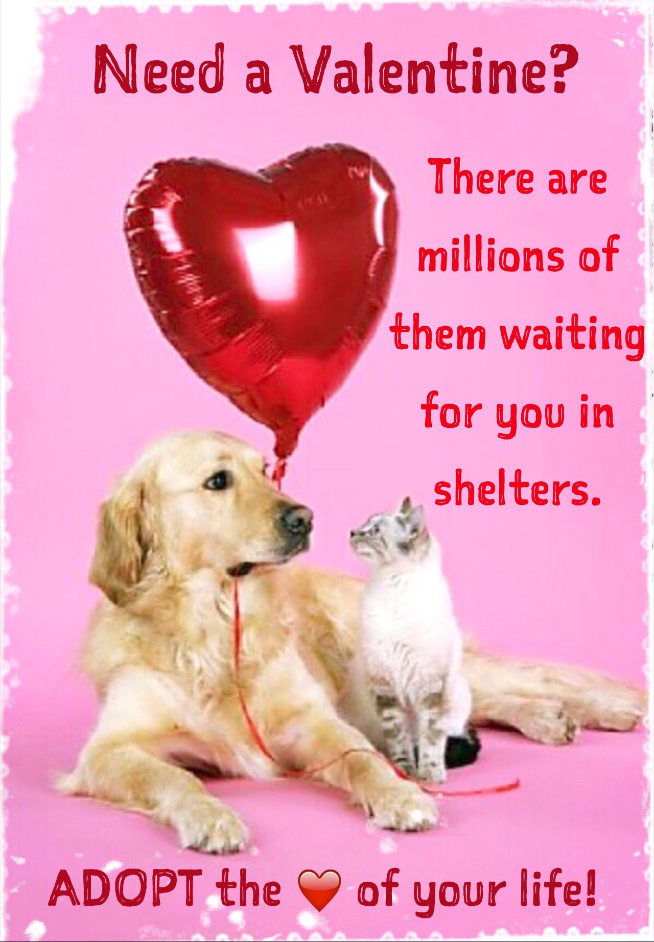Adopt Animals Forever friends pets Friends for