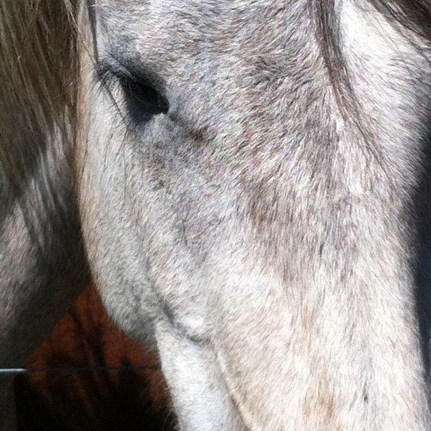 sweet grey pony