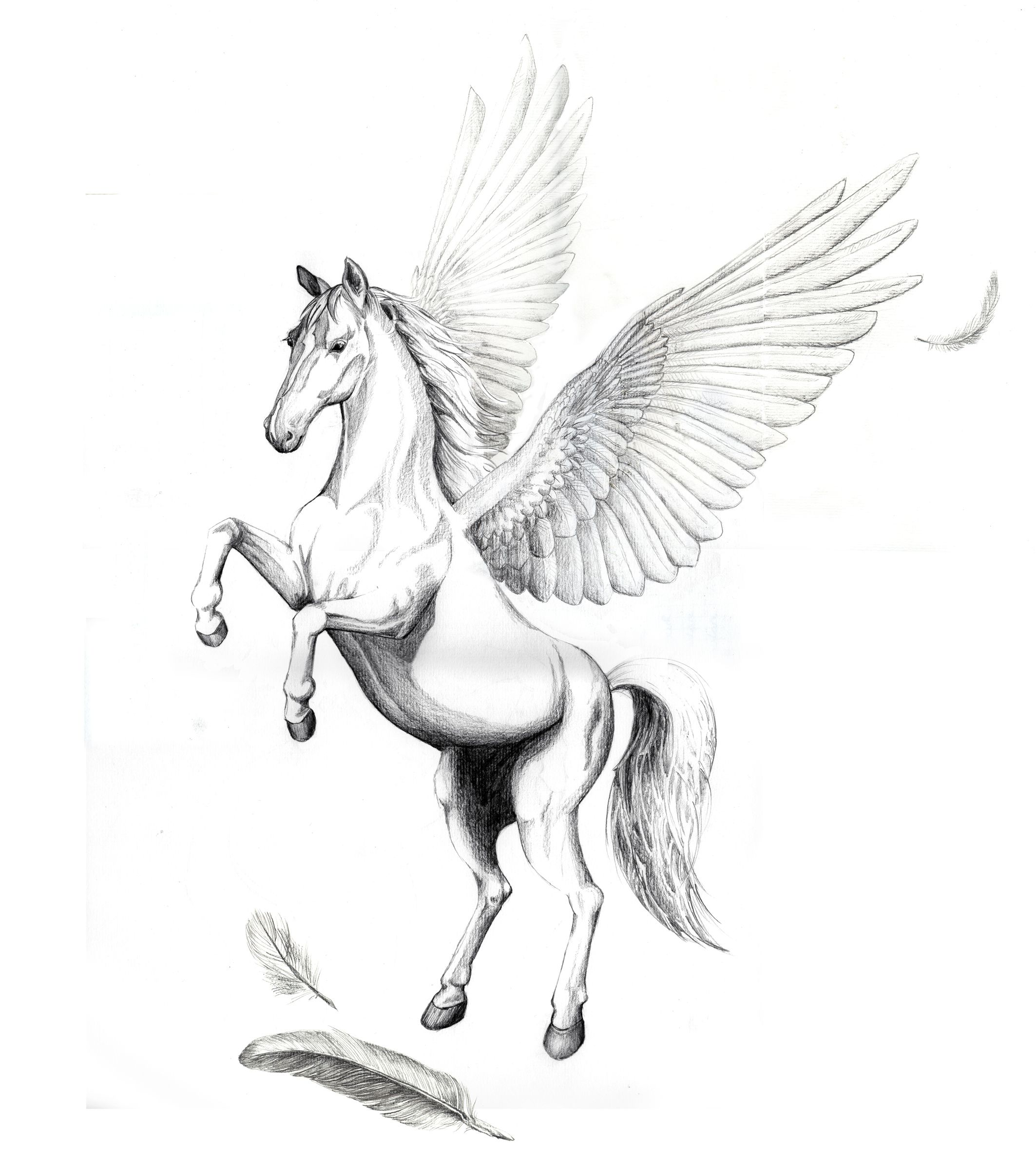 Pegasus Tattoo: Pegasus Tattoo, Tattoo Drawings