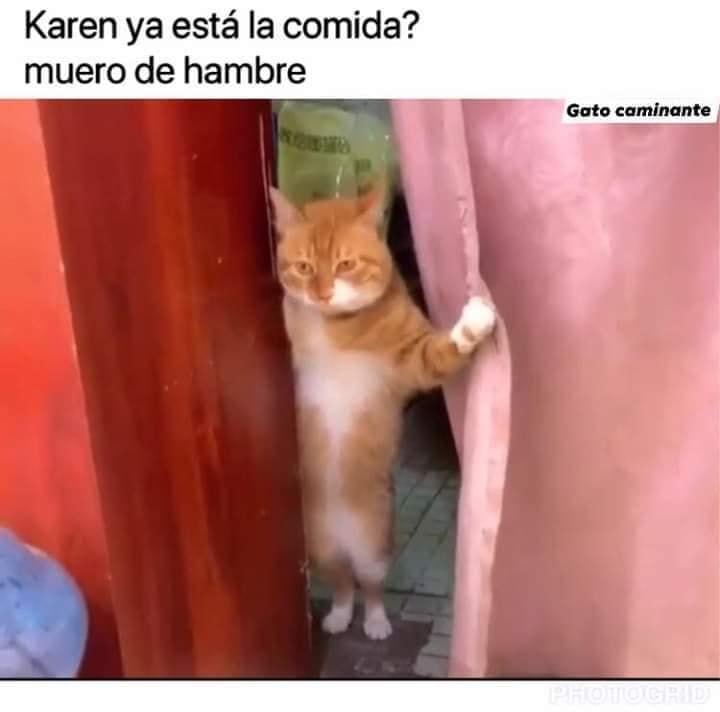 Memes De Karen Y Su Gato El Origen Del Meme Karen Y Su Gato Funny Spanish Memes Animal Memes Funny