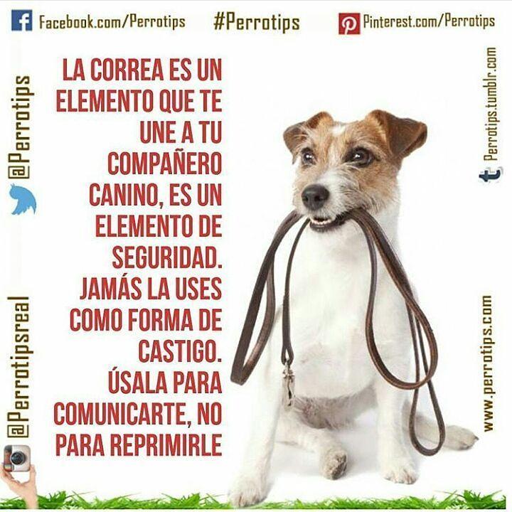 """Haz """"me gusta"""" en nuestra página de Facebook http://ift.tt/1TmYgiS y no te pierdas nuestras actualizaciones #perrotips . . .  También estamos en Twitter como perrotips  #perrotips  #amorperruno #instapets #perrosdeinstagram #cachorros #doglover #cachorro #puppies #can #petstagram  #canes #mascotas #perro #adoptanocompres #hablandoporlosquenotienenvoz  #adopta #perros #dog  #pets #animales #dogsofinstagram #instadogs #noalmaltratoanimal #perrosgram"""
