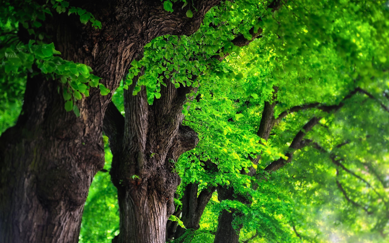 Tree background, bright green Tree images, Photo tree