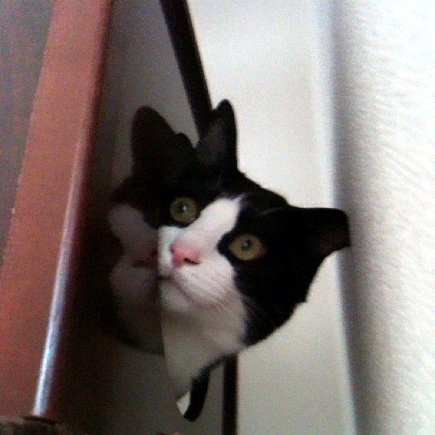 ひょこ #猫 #cat  http://t.co/K1dF5PQz