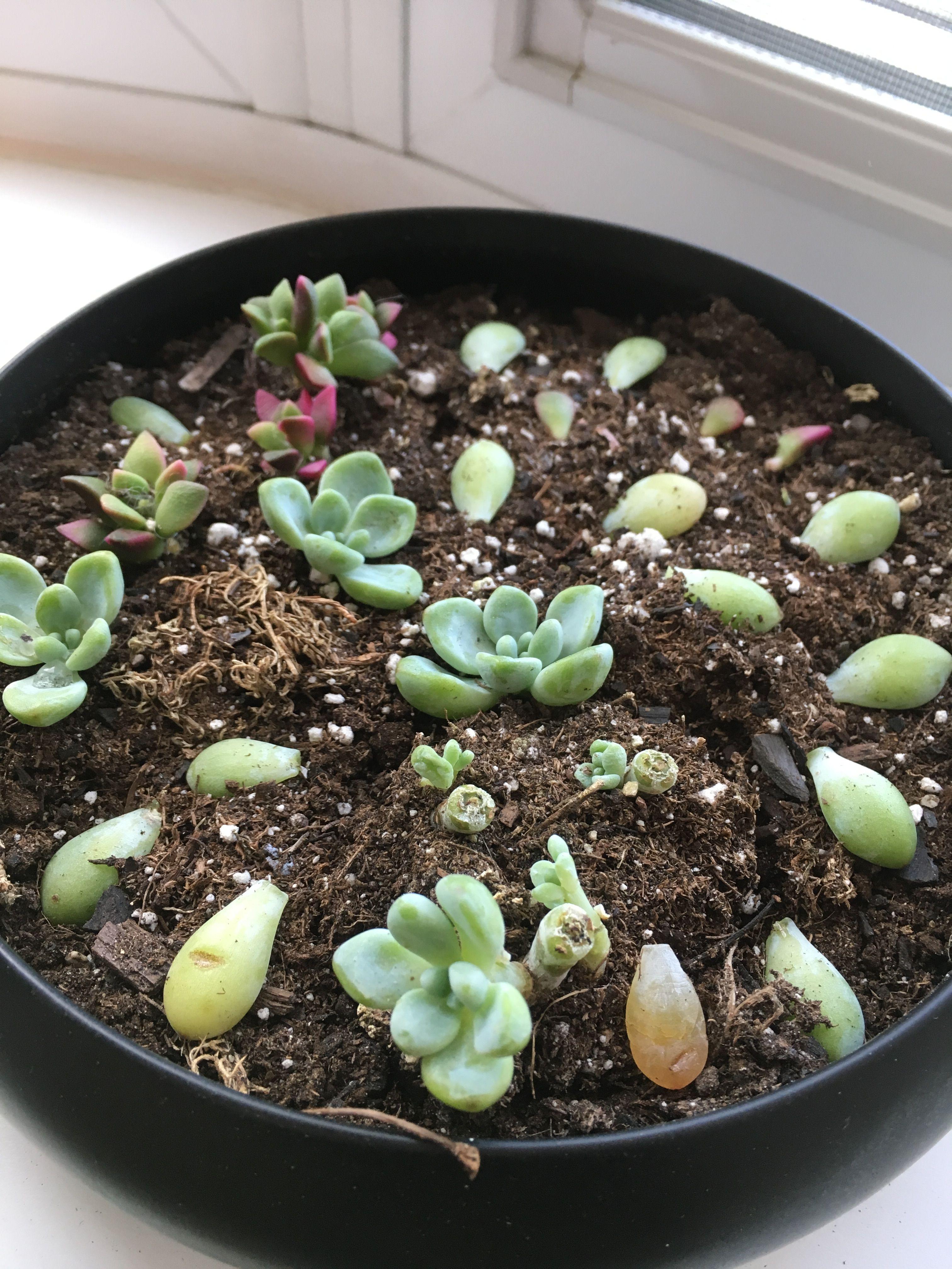 Plante Grasse Succulente Repousse Avec Images Bouture Plante