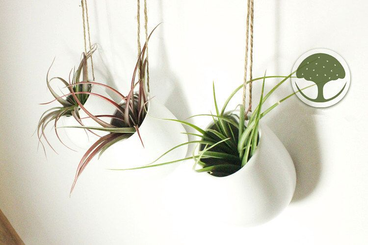 Set Of 3 Empty Mini White Ceramic Wall Planters Air Plant Hanging Holder