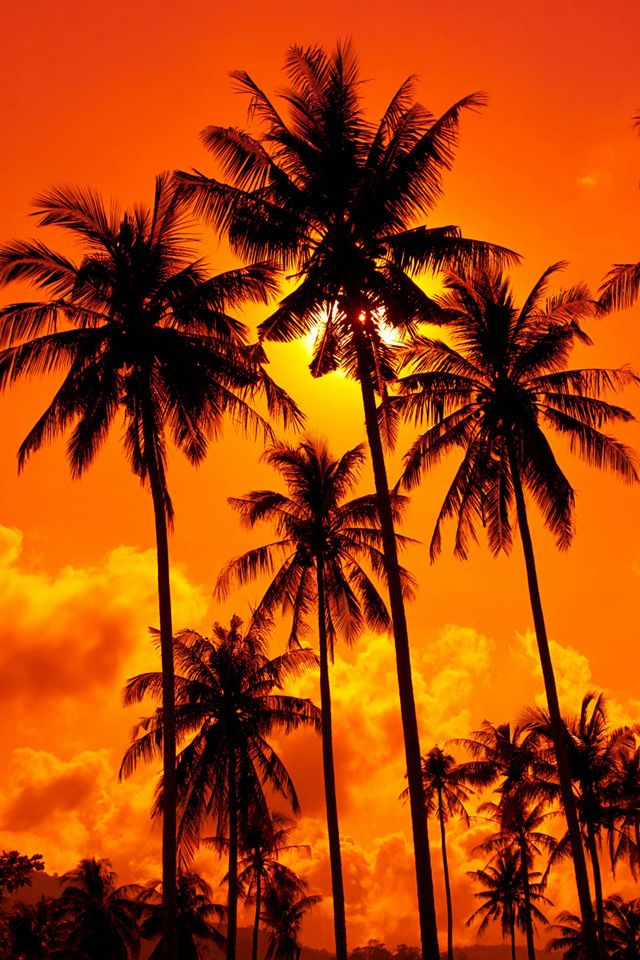 Orange Sunset Wallpaper Orange Sunset Nature Iphone