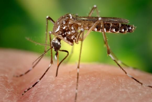 Dengue research breakthrough creates public health dilemma- Nikkei Asian Review