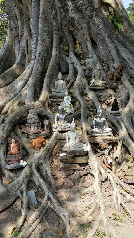 Temple in a Bodhi Tree   : | Trees in 2019 | Buddhist shrine