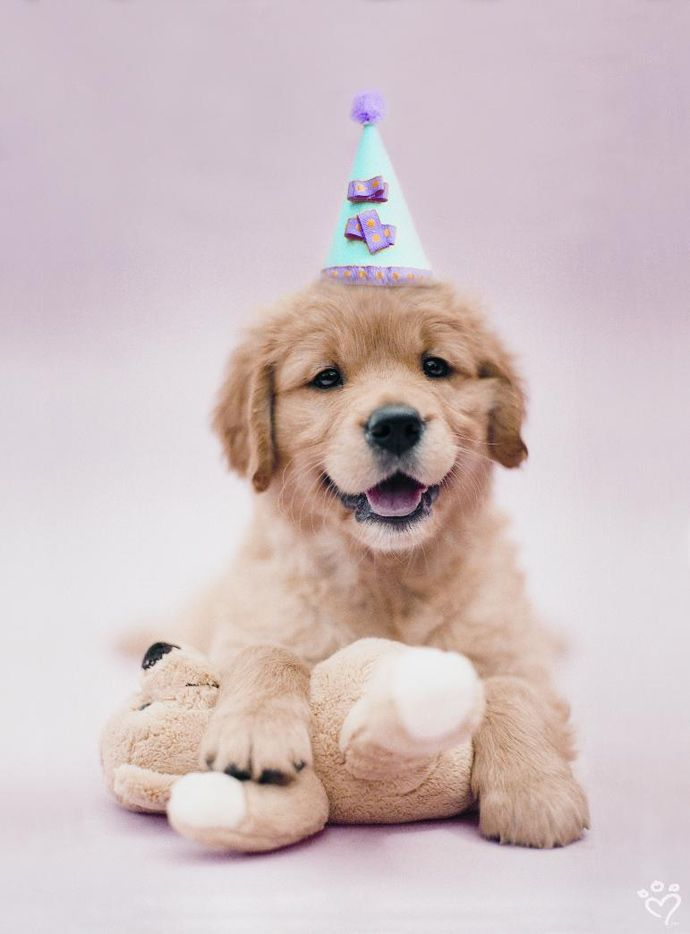 This puppy is starting the party with a big cuddly bear hug