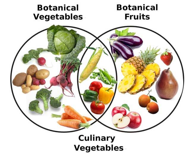 Image result for difference between vegetable and fruit