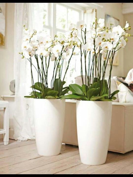 Pin de Shimona Dsouza en indoor plants Pinterest Plantas - decorar jarrones altos