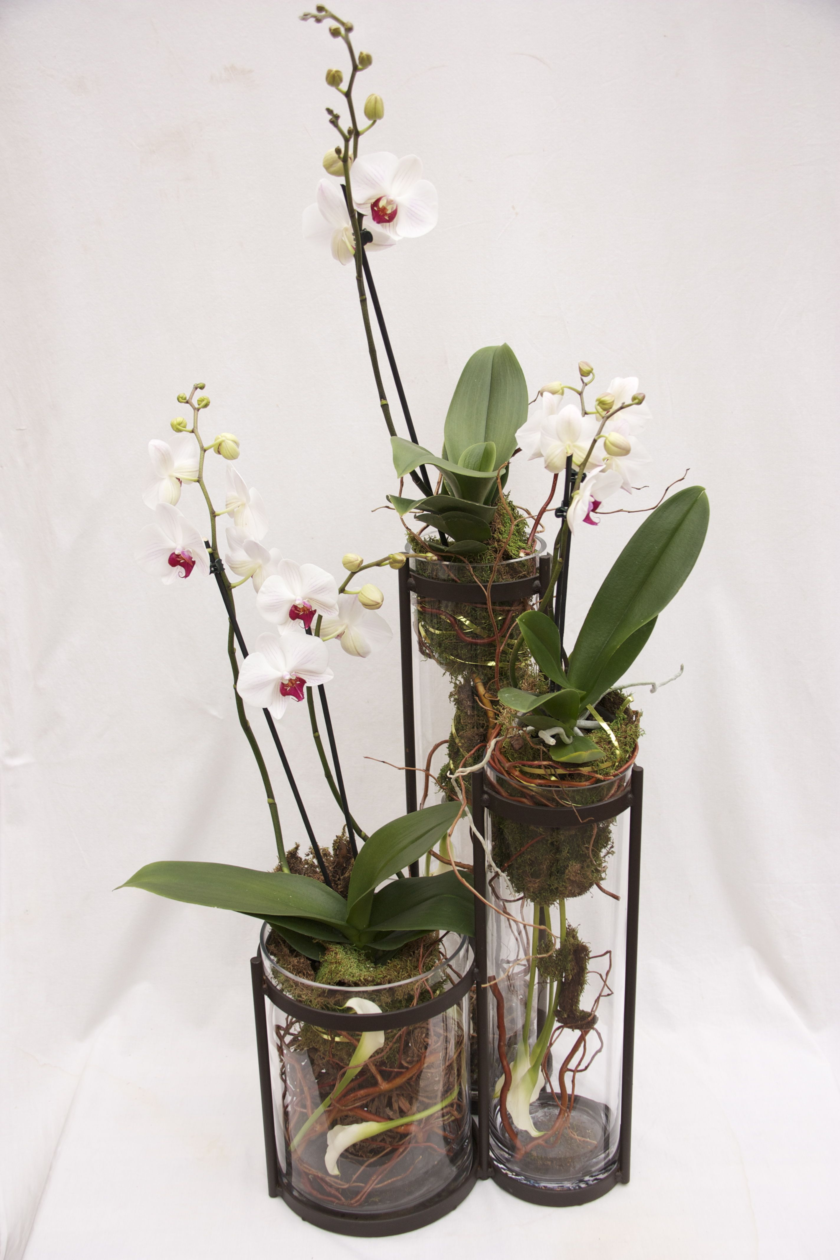 The Watering Can Flower Market Phalaenopsis planter