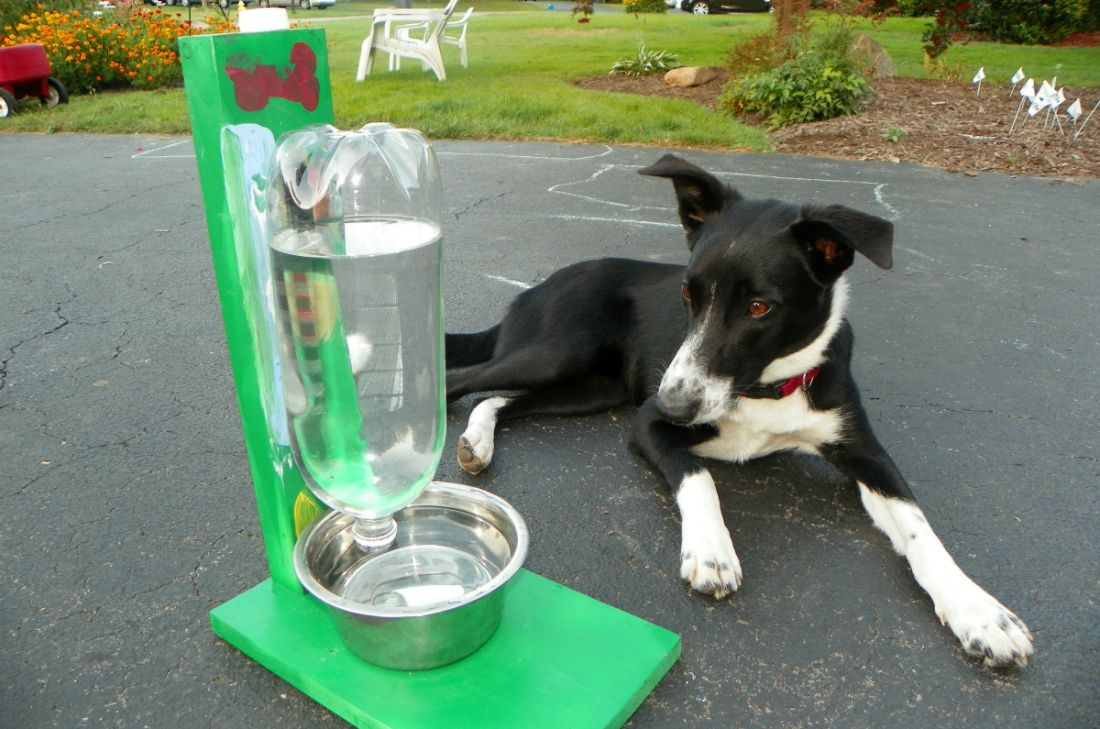 Awesome Diy Projects For Your Puppy Diy Projects For Dog Lovers Pet Diy Projects Pet Water Bowl