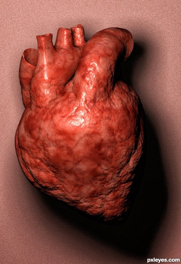 Real Human Heart | Gallery Real Human Heart Pictures | hearts ...