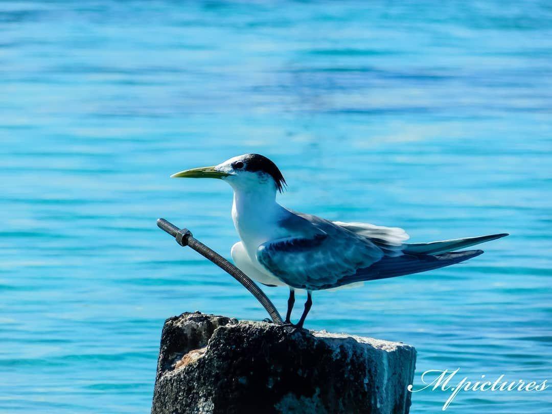 Nature regains its rights💧 #tikehau #bird #birdisland #frenchpolynesia #tuamotu #lagoon #ocean #sea #birdphotography #nail #rock #human #naturalenvironment #nature #photography #pictures #photo #nikonphotography #nikon #madebyme #travel #holidays #vacacion #polynesie #hikewithpk #hiking #beautiful #coral #beautifulnature #tern