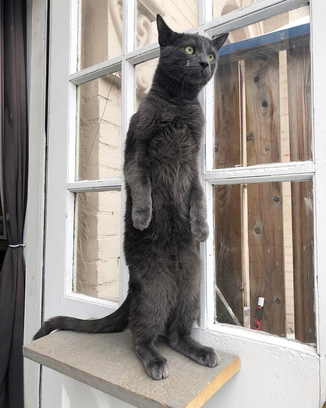 Obrázky pěkných kočiček