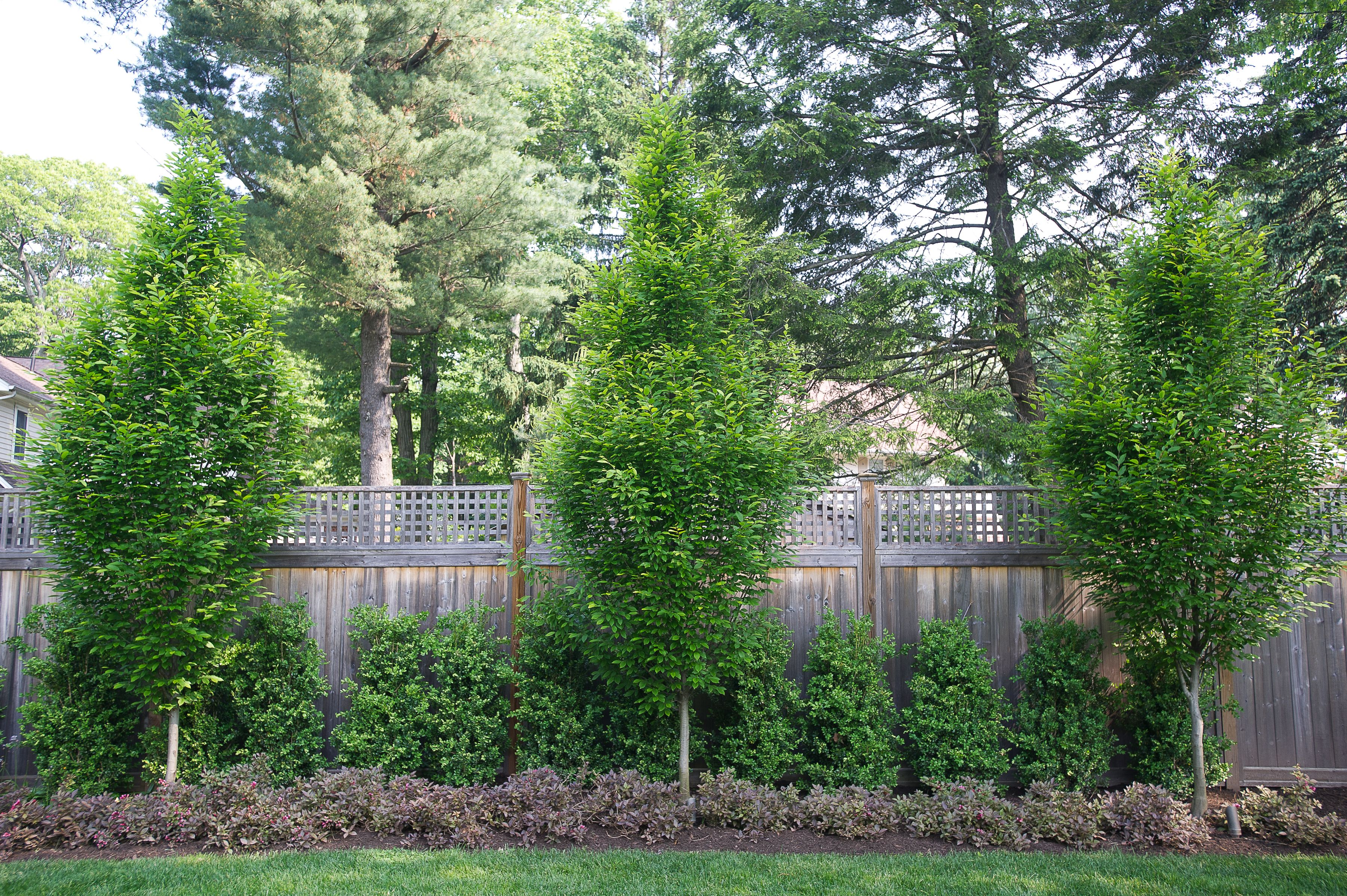 The Garden Is Less Than Four Feet Wide And Is A Straight Line Along The  Fence