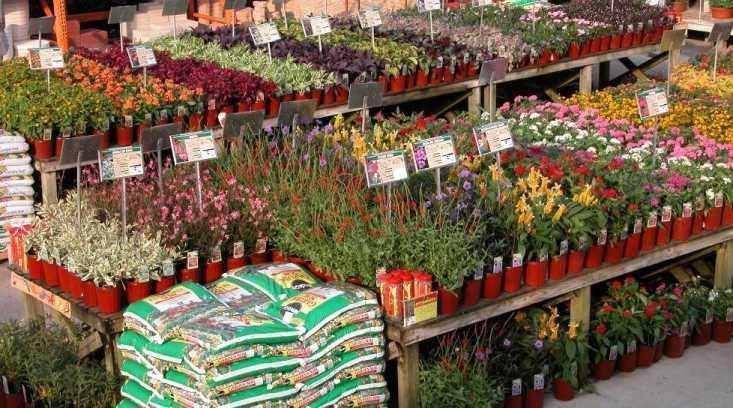 Garden Center Garden Nursery Garden Center Plants