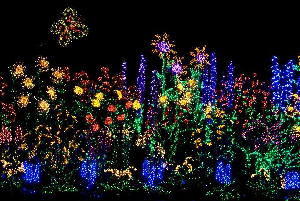Christmas Lights Bellevue Botanical Gardens Holiday Lights Display Outdoor Christmas Lights Holiday Lights