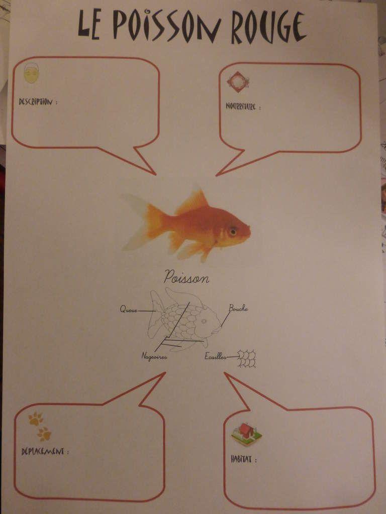 Fiches d 39 identit animaux pour la maternelle explorer le - Le petit poisson rouge maternelle ...