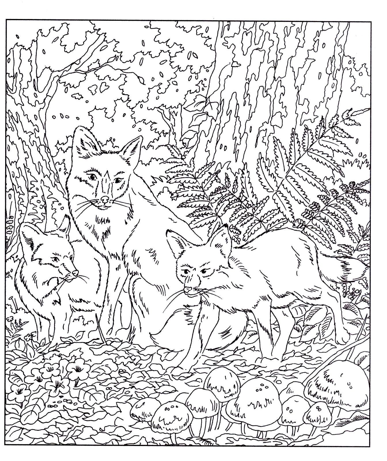 Wildlife Animals Adult Colouring Book Doodle Design New Mindfulness P B 3