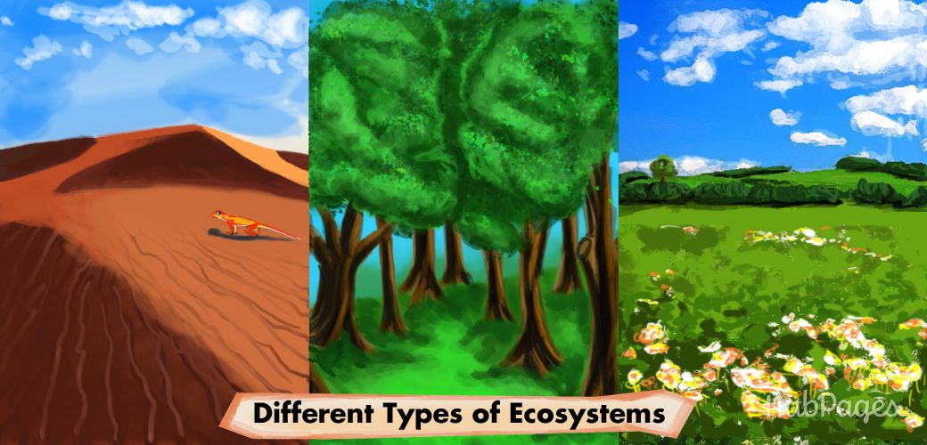 Introduction to Natural Ecosystems Assassin