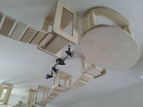 Cat Wall Climbing Systems Modular Kitty Playground Gives