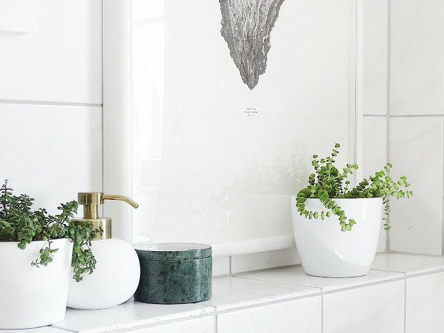 Badezimmer Pflanzen ~ Auf der mammiladen seite des lebens meine pflanzen und ich
