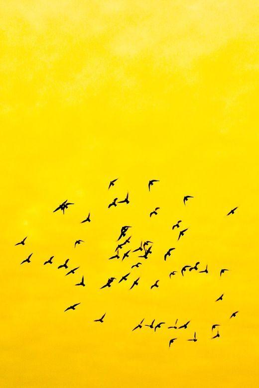 Ekhne Loves Yellow Pastel Roadtosalone2014 Shades Of