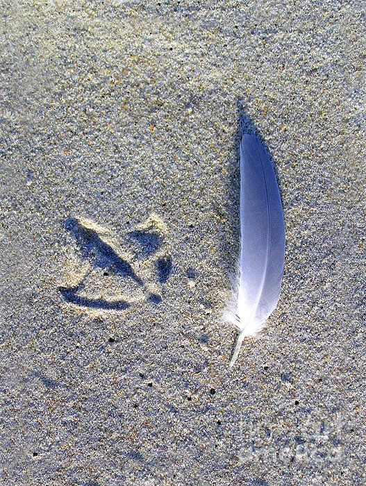 Footprint & Feather Blue