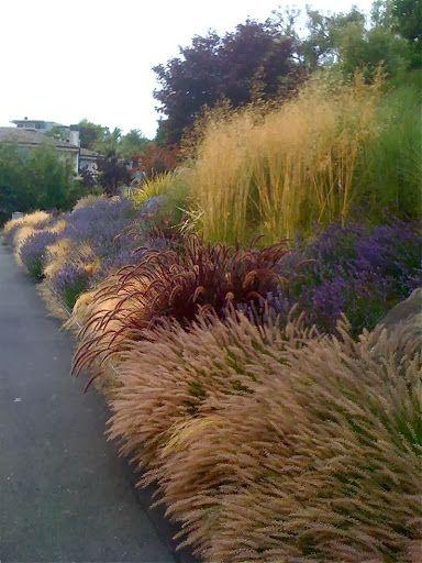 Graminacee ornamentali perenni in mix perfette per for Giardini ornamentali