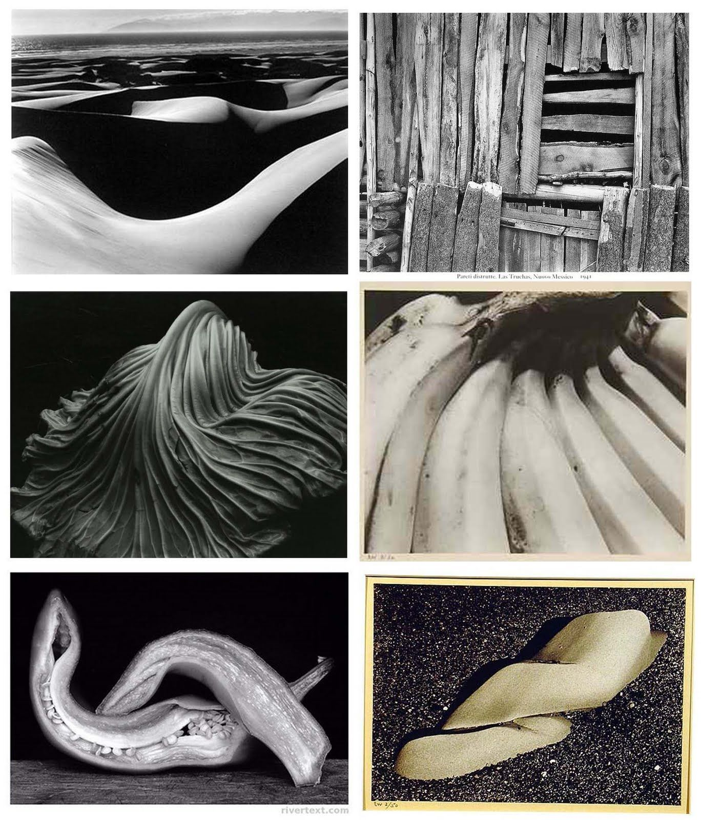 Edward Weston, Still Life, American Photographer 1886-1958